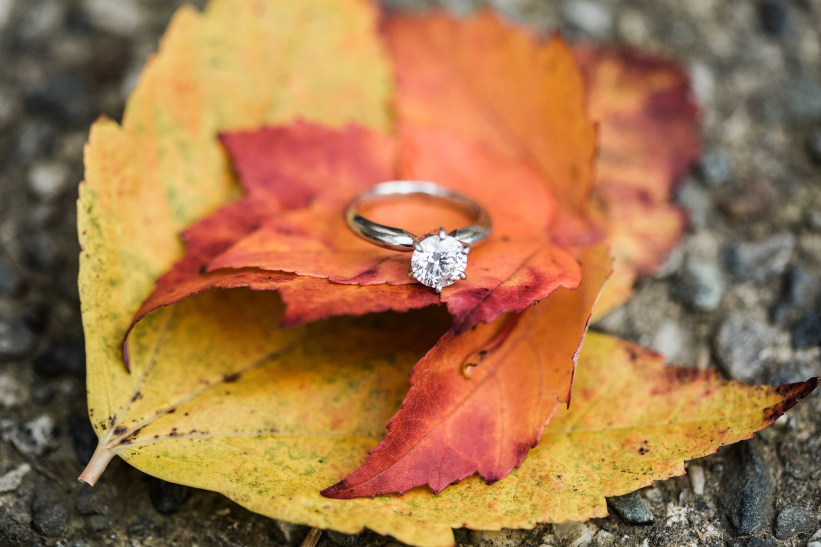 Wedding and Enagement Pricing Slider-30 Fall Ring Photography