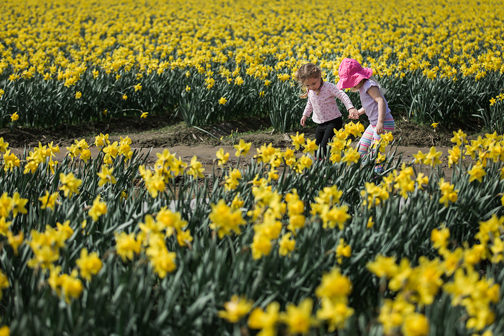 5 Tips and Ideas for Spring Photos YOU can take!